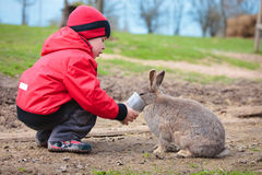 Little boy feed a rabbit Royalty Free Stock Photos