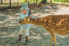 Little boy feeding deer in farm. Closeup.  Stock Photography