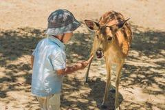 Little boy feeding deer in farm. Closeup.  Stock Photo