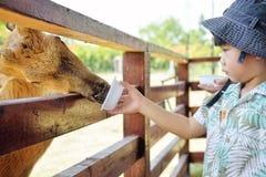 Little boy feeding deer in farm : Closeup. Little boy feeding deer in farm : Close up Royalty Free Stock Photos