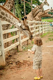 Little boy feeding a giraffe at the zoo Stock Image