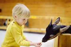 Little boy feeding goat at indoor petting zoo. Little boy feeding goat. Child at indoor petting zoo. Kid having fun in farm with animals Royalty Free Stock Photography