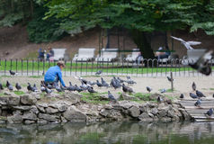 Little boy feeding pigeons Stock Photos