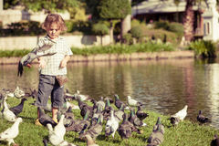 Little boy feeding pigeons in the park Royalty Free Stock Photography