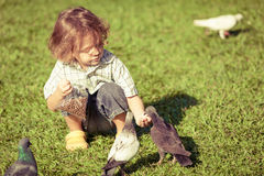 Little boy feeding pigeons in the park Stock Image