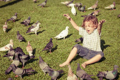 Little boy feeding pigeons in the park Stock Photos