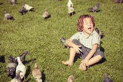 Little boy feeding pigeons in the park Stock Images