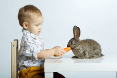 Little boy feeding rabbit with carrot Royalty Free Stock Images