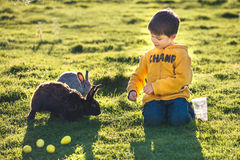 Little boy feeding two rabbits in farm Stock Photography