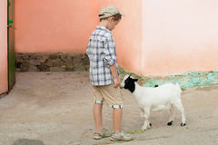 Little boy feeds a goat Stock Images