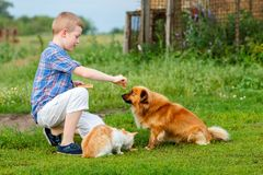 Little boy feeds homeless cat and a stray dog, the dog sniffs the food and do not wants to eat stock photo
