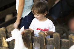 Little Boy feeds white goat Stock Images