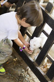 Little Boy feeds white goat Stock Photography