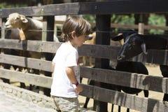 Little Boy feeds white goat Stock Image