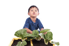 Little boy fertilizer to vegetables in pots Stock Photography