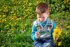 Little boy on the field with dandelions in hands Royalty Free Stock Images