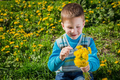 Little boy on the field with dandelions Royalty Free Stock Photo