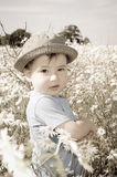 A little boy in a field of flowers Royalty Free Stock Photos
