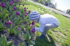 Little boy on field of tulips flowers stock image