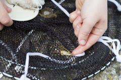 Little Boy fiske och fångakrabbor försöka att välja upp dem fotografering för bildbyråer