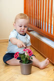 Little boy with flower Stock Photography