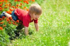 Little boy on the flower lawn Stock Photos