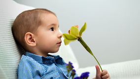 Little boy with a flower. Stock Photo