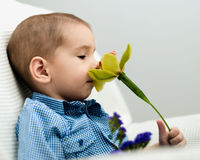 Little boy with a flower. Royalty Free Stock Images