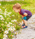 Little boy with flowers Stock Photography