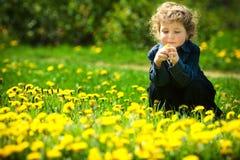 Little boy in flowers field Stock Image