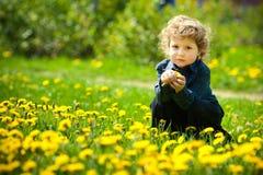 Little boy in flowers field Royalty Free Stock Photo