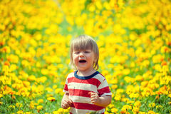 Little boy on the flowers lawn Stock Images