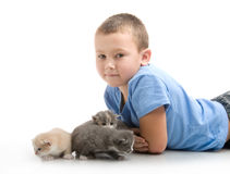 The little boy with a fluffy kitten Stock Image