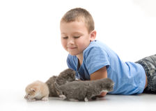 The little boy with a fluffy kitten Stock Images