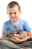 The little boy with a fluffy kittens Royalty Free Stock Image