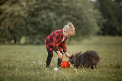 A little boy with a football with his dog Stock Images