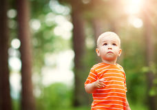Little boy in the forest Royalty Free Stock Photography