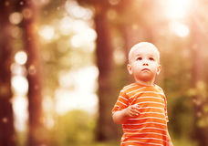 Little boy in the forest Stock Photos