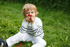 Little boy with fresh raspberries on organic self pick farm. Beautiful boy with raspberries on organic self pick farm in Germany Stock Photo