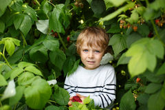Little boy with fresh raspberries on organic self pick farm. Beautiful boy with raspberries on organic self pick farm in Germany Stock Photography