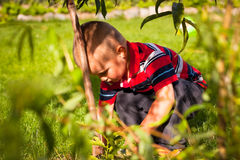 Little boy in the garden Royalty Free Stock Photo