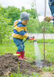 The little boy in the garden, watering the tree planted by strands of sapling from a hose, Stock Images