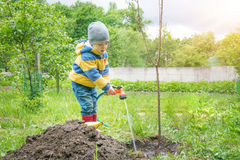 The little boy in the garden, watering the tree planted by strands of sapling from a hose, Stock Image