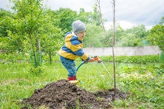 The little boy in the garden, watering the tree planted by strands of sapling from a hose, Stock Photography