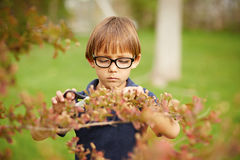 Little boy gardening outdoors Royalty Free Stock Photos