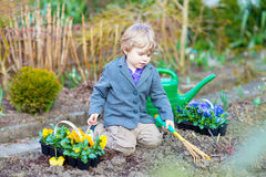 Little boy gardening and planting flowers in garden Royalty Free Stock Photo