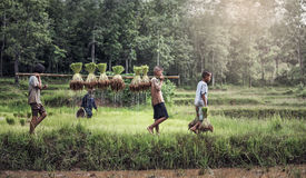 Little boy and girl farmer Stock Photography