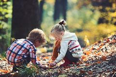 Little boy and girl friends have fun on fresh air. Children pick acorns from oak trees. Brother and sister camping in. Autumn forest. Childhood and child royalty free stock photo