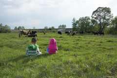 Little boy and girl in the meadow grazing cows. Stock Photography