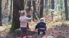 A little boy and girl in the nature, woods, forest. Happy family walking with dog in the forest. Happy little girl have
